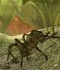 螞蟻(yi)模擬