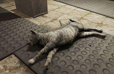 《辐射76》吃猫维持生命引声讨 玩家呼吁加入领养功能