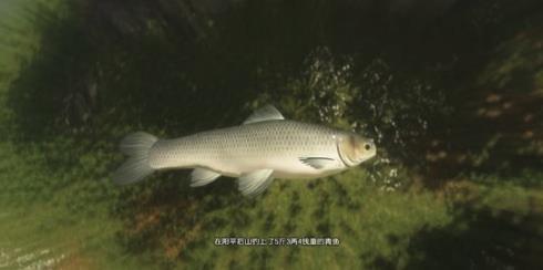 古剑奇谭3青鱼获得方法