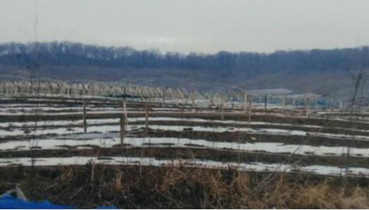 六千亩密林疑被毁种人参具体情况介绍