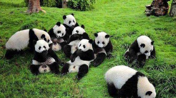 大熊猫抵达莫斯科是怎么回事-大熊猫抵达莫斯科的具体情况介绍