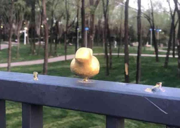 世园会小鸟被掰断:在北京世园景区的湿地景点的一座石桥上原本百余只的金属小鸟在开园没几天,就只剩17只了,其它的都被游客们拧下带走了。
