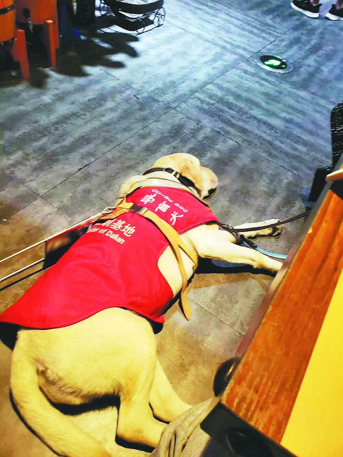 合肥首只导盲犬遭拒载:合肥首只导盲犬遇到麻烦了,坐公交打出租遭遇拒载