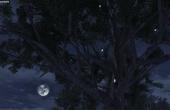 明日之后花瓣樹飄葉樹位置介紹