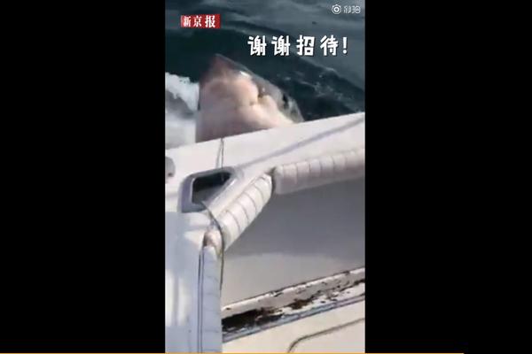 垂纶钓到清楚鲨:须眉垂纶钓到900公斤清楚鲨,吃完鱼饵扬长而去
