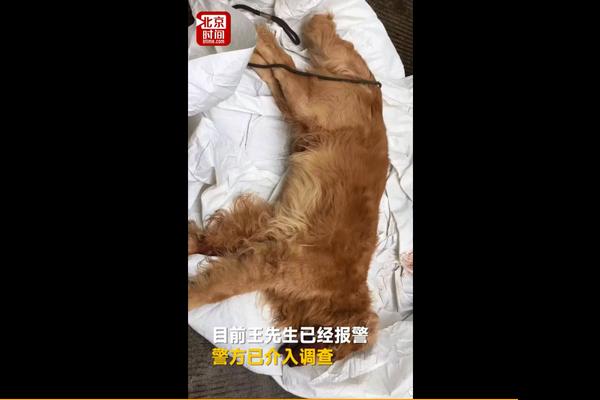 打死金毛犬被刑拘 疑自家泰迪被咬死