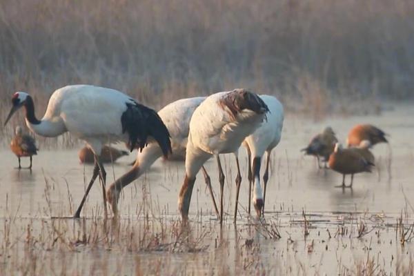 中国再添一处世遗:中国黄(渤)海候鸟栖息地(第一期)入选世界遗产