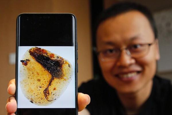 中国科学家在琥珀中发现古鸟类新物种