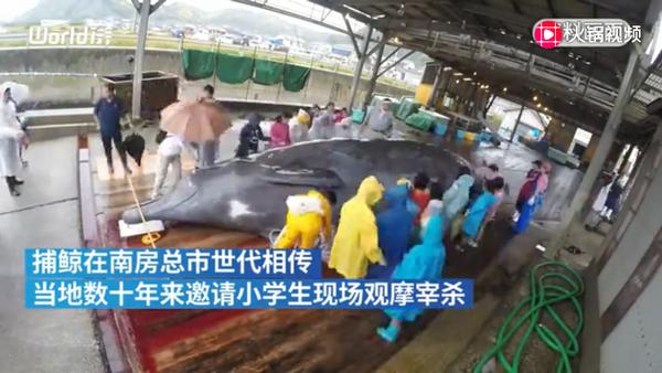 日本组织小学生观看杀鲸鱼是怎么回事-日本组织小学生观看杀鲸鱼详情介绍