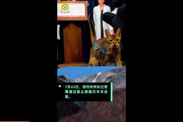 紐約州禁止除貓爪手術是怎么回事-紐約州禁止除貓爪手術詳情介紹