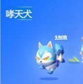 QQ飞车手游中宠物哮天犬技能作用介绍