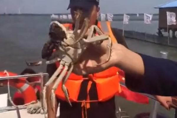 阳澄湖大闸蟹正式开捕,今年产量预计1400吨,价格小幅上涨
