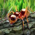 探索昆虫世界