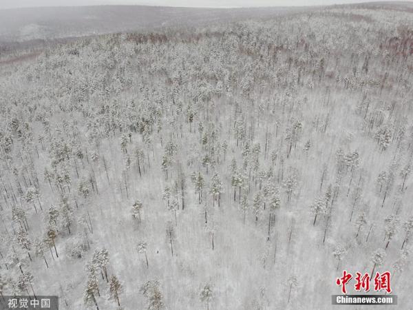 黑龙江漠河迎降雪,大地银装素裹如画卷