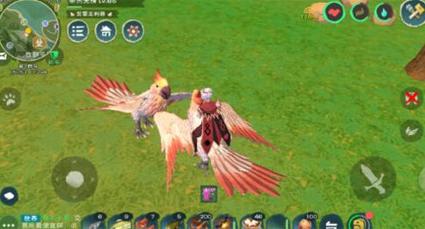 创造与魔法极品鸟抓捕攻略