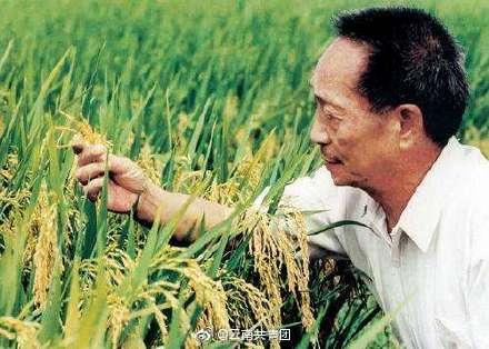 袁隆平超级杂交稻平均亩产1004.83公斤详情介绍