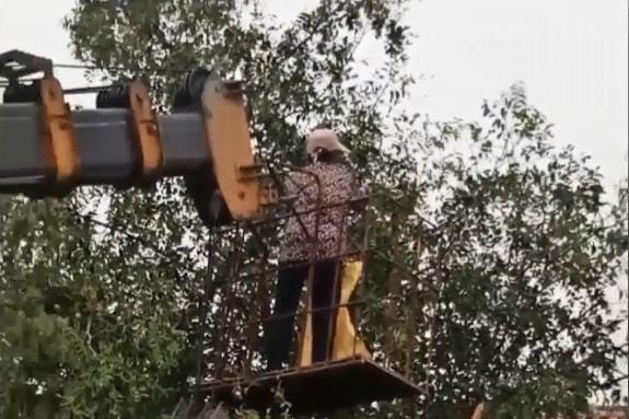 儿子开吊车将母亲举高摘枣是怎么回事